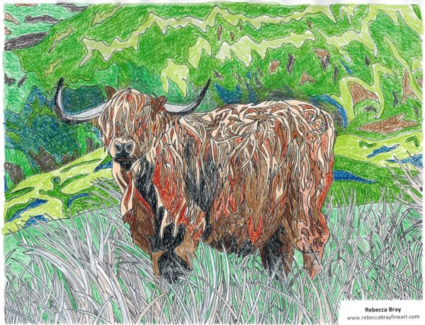 Hairy Coo Finished